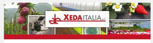 xeda-italia-front-home-page.jpg