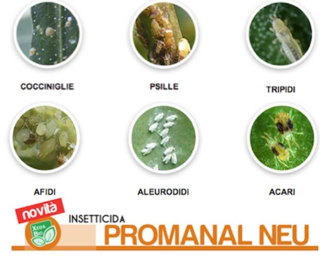 xeda-promanal-neu11