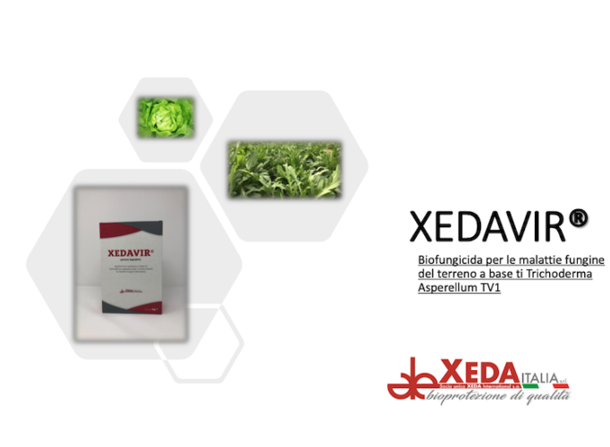 xedavir-fungicida-ceppo-tv1-trichoderma-febb2021-fonte-xeda.png