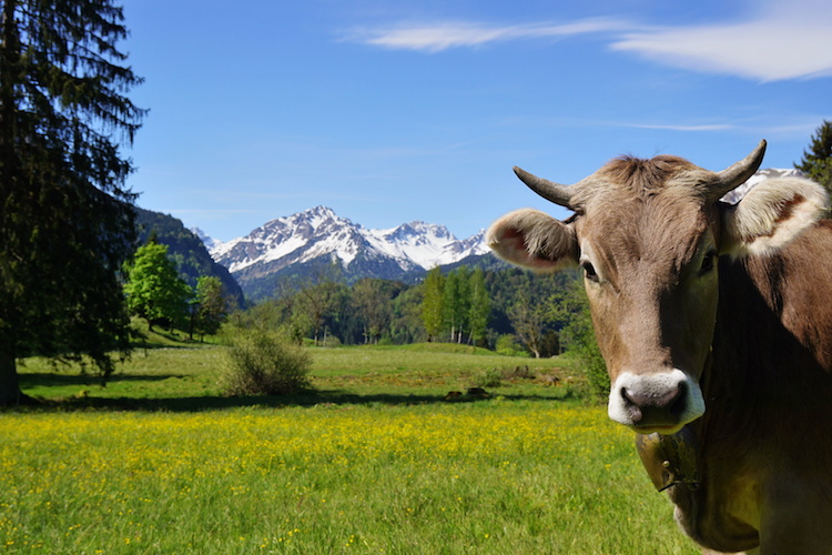 zootecnia-agricoltura-montagna-by-andreas-p-fotolia-750