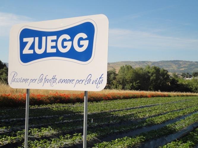 zuegg-passione-per-frutta-amore-per-vita-viazueggit.jpg