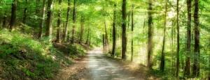 0astrada-forestale-bosco-foresta-stradone-by-eyetronic-adobe-stock-750x288jpeg