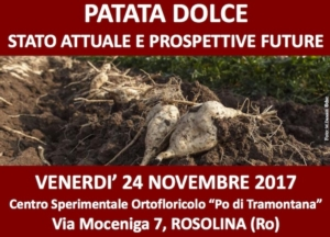 20171124-patata-dolce