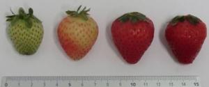 Piccoli frutti protagonisti a San Michele all'Adige - Plantgest news sulle varietà di piante