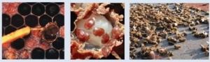 20180805-patologie-api-varroa-evento