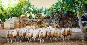 20181018-19-benessere-animale-convegno-rete-rurale