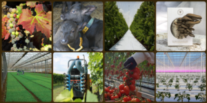 20201203-innovainazione-rete-rurale-webinar
