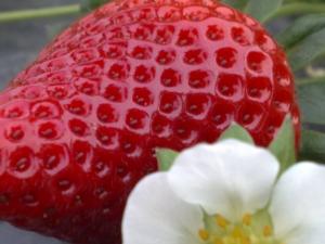 """Geoplant: tutti """"pazzi"""" per le californiane - Plantgest news sulle varietà di piante"""
