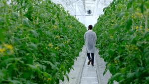 Orticoltura in serra, cosa possiamo imparare dall'Olanda? - Plantgest news sulle varietà di piante