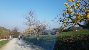 5-parco-villa-ghigi-novembre-2020-articolo-pubblici-giardini-20210224-fonte-teresa-guerra-750x422