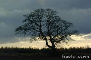 Africa-paesaggio-free-foto-com
