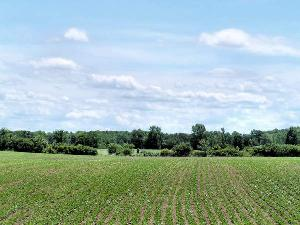 Agricoltura_5