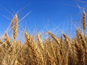 Cereali1