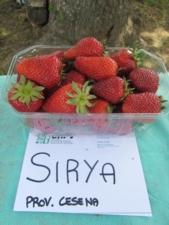 Fragola-Syria-Cesena