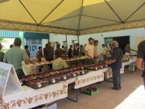 Fruitaly 2012, vetrina dell'innovazione e dei mezzi tecnici - Plantgest news sulle varietà di piante