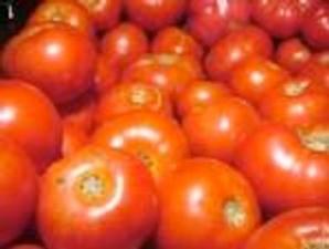 Pomodoro-da-industria_1501