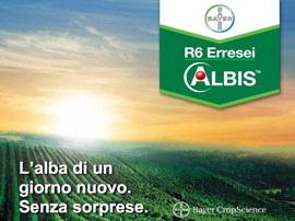 R6-erresei-albis-bayer-peronospora-vite