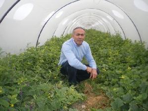 Sebastiano-Barone-serra-colture-protette-melone-pachino