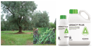 adama-legacy-plus-olivo-apertura
