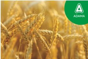 Adama per i cerealicoltori