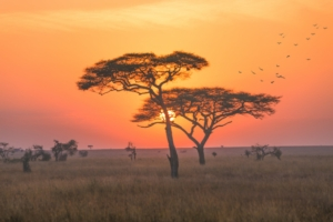 africa-tramonto-tanzania-by-putsada-adobe-stock-750x501