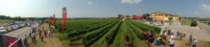 agco-macchine-agricole-vigneto-evento-in-campo-8-giu-2013-verona-ph-by-il-agronotizie-cspadoni