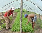 agricoltori-immigrati