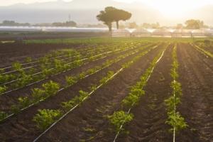 Ilsamin Multi, il fertilizzante biologico adatto per curare le carenze nutrizionali