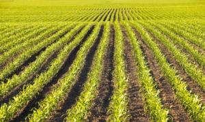 Bilanci fitosanitari, i prossimi appuntamenti