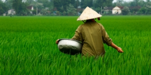 agricoltura-cinese-cina-riso-by-michel-adobe-stock-750