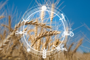 agricoltura-digitale-di-precisione-by-prostock-studio-adobe-stock-750x500
