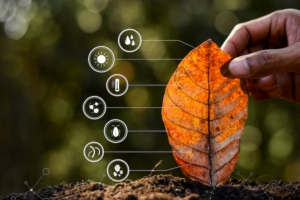 agricoltura-digitale-foglia-tecnologie-residui-vegetali-microrganismi-by-994yellow-adobe-stock-750x5001
