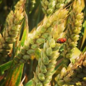 agricoltura-sostenibile-by-cs-agronotizie-instagram.jpg
