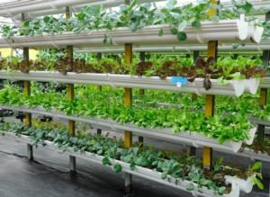 agricoltura-verticale-by-aisyaqilumar-adobe-stock-686x500