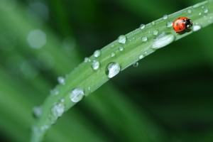 Come tenere traccia dell'impiego di insetti utili con QdC?