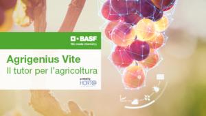 Agrigenius Vite, il Dss di BASF per la gestione del vigneto