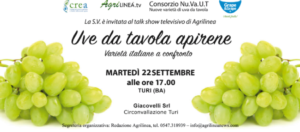 AGGIORNAMENTO AL 21 SETTEMBRE - Uve da tavola apirene: varietà italiane a confronto - Plantgest news sulle varietà di piante