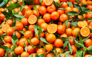 agrumi-fonte-confagricoltura-taranto