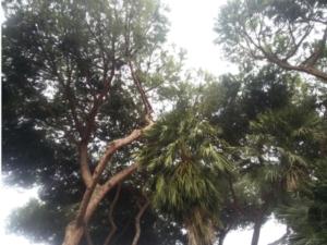 alberi-alberature-verde-pubblico-by-matteo-giusti-agronotizie-jpg