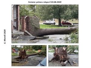 alberi-ferrara-post-temporale-03082020-fonte-morelli-pubblici-giardini-20201111