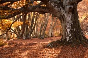 alberi-monumentali-albero-canfaito-by-monica-cavalletti-adobe-stock-750x500