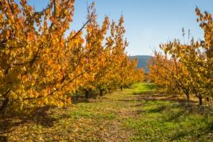 I vantaggi della nutrizione in post-raccolta - le news di Fertilgest sui fertilizzanti