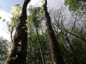 alberi-tree-talker-progetto-castagni-parlanti-lug-2021-fonte-progetto-castagni-parlanti