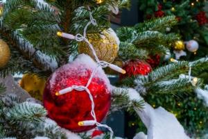 Un Natale tra gli abeti in vivaio - Plantgest news sulle varietà di piante