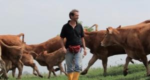 alberto-negri-bovini-razza-limousine-numero-luglio-fonte-allevatori-top
