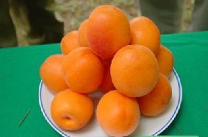 albicocca-Bora-citta-della-frutta