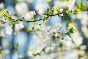 Frutticoltura Vs meteo - Plantgest news sulle varietà di piante