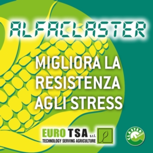 Alfaclaster: il compagno ideale per la lotta alle micotossine - colture - Fertilgest