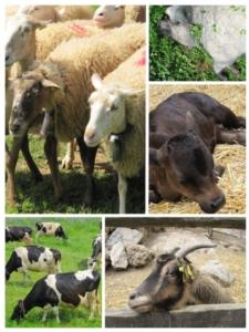 allevamento-animali-fattoria-by-pedrolieb-fotolia-750