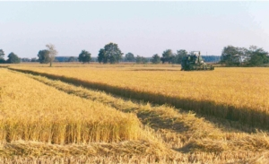 amf-parco-agricolo-sud-milano